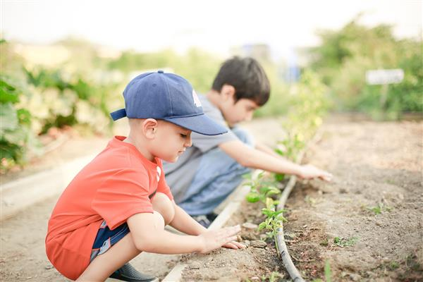Young boy planting seed in garden